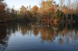 Powel's Geese