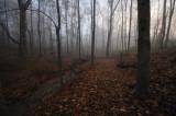 Autumn Woodlands Trail Bridge