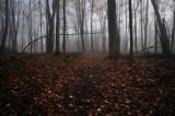 Rowe Woods Trail