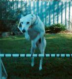 Jumping practise