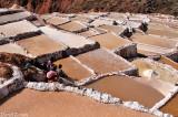 The Sallinas of Maras
