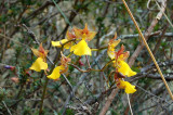 Orchids at the Inca trail