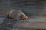 Galapagos Islands July 2006