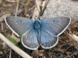 all_butterflies