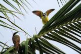 IMG_6275birds.JPG