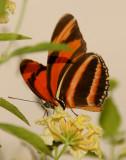 DSC01978 - Monarch