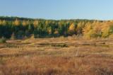 DSC05570 - Autumn Wetlands