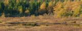 DSC05569 - Autumn Wetlands II
