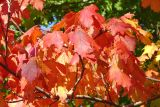 Autumn Color 001
