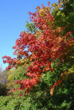 Autumn Color 005