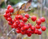 Autumn Color 021