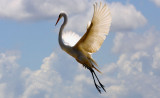 The Fighting Egret