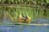 September 21st, 2006 - Turtles 3417