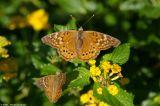 October 11th, 2006 - Butterflies 4335