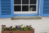 A Resident Of St. Mawes
