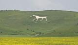 The Alton Barnes White Horse