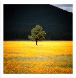 Impressions of a Field of Yellow Flowers
