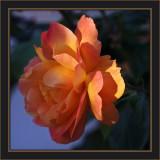 Hannah's Rose -Rev: 9-24: Happy 10th Birthday! Best & Love - g
