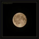June's '08 Rose Moon Of Summer's Start