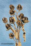 Seedcases
