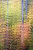 Fall Tree Dream