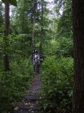 Zebra Zubra Walk / Bizon's Trail