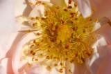 kvetiny4.JPG