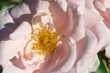 kvetiny8.JPG
