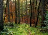 A Walk In Ravensdale Park