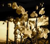Unseasonal blooms