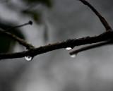 December drops