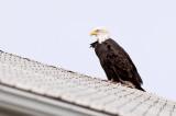 Up on the Roof . DSC_7541-Edit.jpg