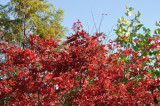 Fall foliage DSC_7678-1.jpg
