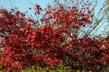 Fall foliage DSC_7730-1.jpg