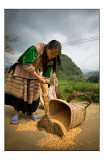 Sweeping with the Flower Hmong people