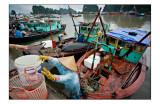 Ha Long fishing harbor 3