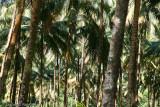 Coconut Grove II