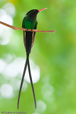 Doctor Bird IV