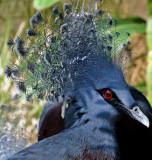 Blue bird with fancy headdress