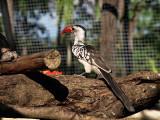 Little bird with orange beak