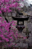 blossoms and lantern.jpg