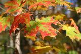 fall_2006