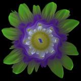 Julia flower #2