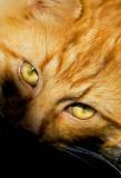 _MG_6785 Garfield.jpg