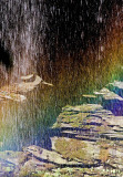 _MG_7067 Henryhd Falls.jpg