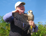 Julie with a Peregrine Falcon
