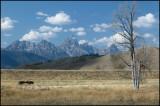 Yellowstone - Grand Tetons