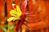 Garden_05Jun2008_0001