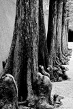 Gnarly Trees B&W