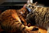 Leica Forum Challenge 18: Animal
